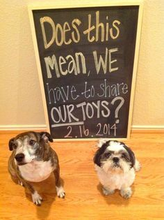 7 Darling Ways To Make A Pregnancy Announcement With Your Dog | http://www.ourfamilyworld.com/2015/12/30/7-darling-ways-make-pregnancy-announcement-dog/