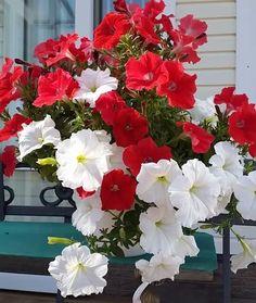 Publicação do Instagram de Flowers & plants beautiful • 16 de Abr, 2018 às 11:21 UTC