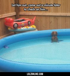 Let Him Out, Came Out A Minute Later#funny #lol #lolzonline