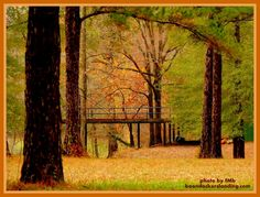 """""""Those who dwell among the beauties and mysteries of the Earth are never alone or weary of life."""" -Rachel Carson  Autumn at Boondockers Landing."""