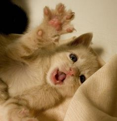 Look at my claws and be terrified. Tooooo cute!