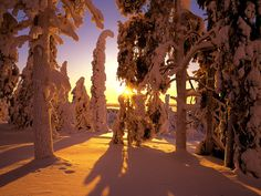 Winter forest view desktop PC and Mac wallpaper Snowfall Wallpaper, View Wallpaper, Forest Wallpaper, Sunset Wallpaper, Nature Wallpaper, Winter Sunset, Winter Snow, Winter White, Winter Magic