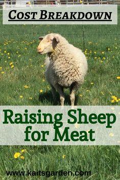 Raising Farm Animals, Raising Ducks, Raising Goats, Raising Chickens, Pet Sheep, Sheep Farm, Meat Farms, Farm Lifestyle, Sheep Breeds
