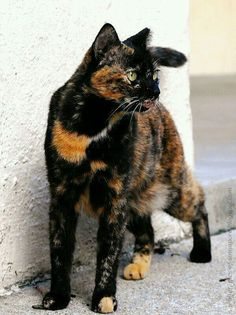 Some adorable cats and cute cats ready to make your day better. This cat stuff is enough for you to have cat love all over you! Cute Cats And Kittens, I Love Cats, Crazy Cats, Cool Cats, Ragdoll Kittens, Tabby Cats, Funny Kittens, Bengal Cats, White Kittens