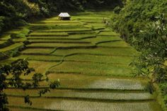 HOT... when touring around northern Thailand on a motorbike- take a pit stop here!