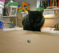 The Creative Cat - Daily Photo Reprise: Mewsette's Resolution, 2012