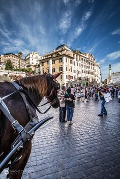 horse and tourists in the spanish steps in Rome by Simone Capriotti on 500px