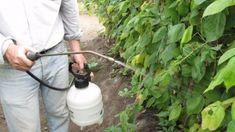 Watering Can, Pest Control, Permaculture, Garden Hose, Compost, Outdoor Power Equipment, Garden Design, Solar, Herbs