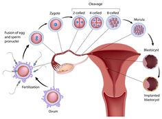 Acupressure Treatment 11 Important Acupressure Points to Improve Fertility in Women - Stimulate these 11 vital acupressure points in order to treat infertility in women. Prepare your body for pregnancy and relieve female menstrual problems. First Time Pregnancy, Early Pregnancy Signs, Pregnancy Months, Pregnancy Tips, Week 3 Pregnancy Symptoms, 3 Weeks Pregnant Symptoms, Pregnancy Outfits, Ivf Treatment, Menopause