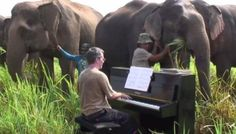 This Pianist Played Beethoven For Elderly Elephants.