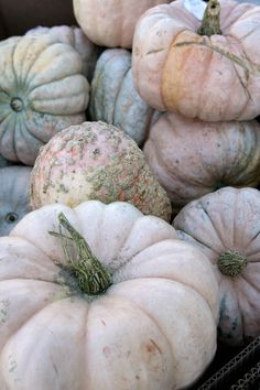 Pumpkins - Clemmensen and Brok - SEEDS! I need seeds for these beauties! Anyone have some I can buy, or know a source? TIA!