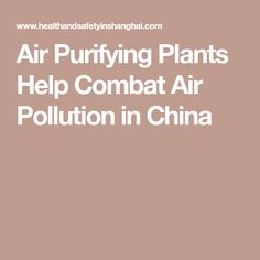 Air Purifying Plants Help Combat Air Pollution in China