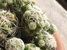 Esiste un legame tra cactus e radiazioni elettromagnetiche?