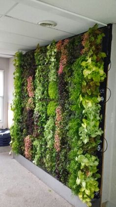 G-O2 green wall in our office