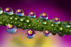 Reflections of a primerose by Alberto Ghizzi Panizza on 500px