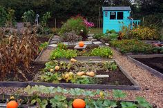 I spent a lovely afternoon at the allotment yesterday.A dull and chillyday but I didn't feel the chill working on the plot. It was a dayof weeding, harvesting (carrots, potatoes and a few pumpki...