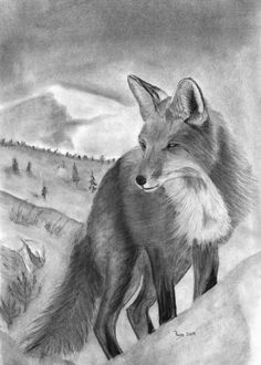 sketches of animals | Charcoal Drawing of a Red Fox | Charcoal Drawings and Pastels