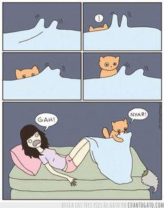 cat versus human http://sulia.com/channel/cats/f/d79c0bfc-a0c2-4986-90a2-424b110a7d58/?