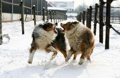 Broertjes in de sneeuw by Chris Morris