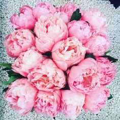 9 lessons in growing the perfect peonies -- shallow planting (tips 2cm below soil), and patience (3 years!)