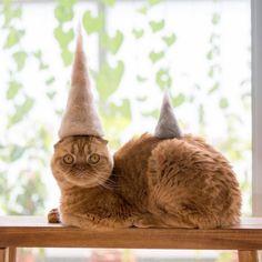Des chapeaux pour chats faits à partir de leurs propres poils - page 2
