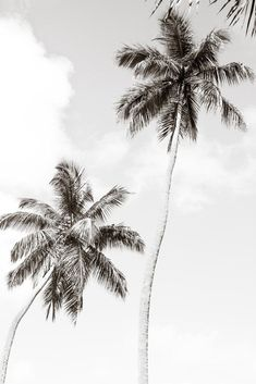 Palm Trees No. 1 - Black and white palm tree wall art by Cattie Coyle Photography Black And White Picture Wall, Black And White Pictures, Black And White Beach, Black And White Background, Black And White Prints, Black And White Posters, Palm Tree Background, White Backround, Black And White Words