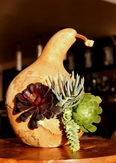 Succulents in a Gourd...how clever!  Enter our Contest and you could win too!