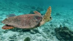 Blue Sea.... Turtle, Relax, Ocean, Water, Blue, Calming Music, Lovers, Youtube, Animales