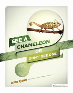 Denver Museum of Nature & Science: Chameleon; I like the textures and shapes they used for this campaign.