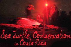 Sea Turtle Conservation in Tortuguero, Costa Rica with @Contiki