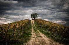 one of the  best wine of the world comes from this magical vineyard . enjoy