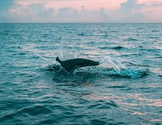 Snowboard, Dolphin Images, Dolphin Tours, Fishing Guide, Fishing 101, Fishing Rigs, Crappie Fishing, South Padre Island