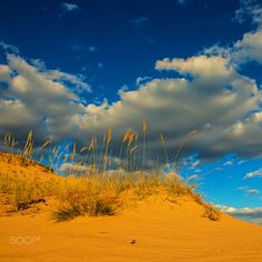 Landscape with sand dunes - Landscape with sand dunes and dry plants on the background of clouds
