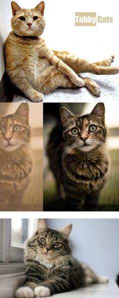 Hot teenagerov mačička