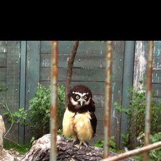 Calgary zoo Calgary, Owls, Beast, Spaces, Bird, Animals, Animales, Animaux, Birds