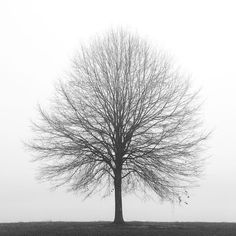 Art for home.....black and white tree