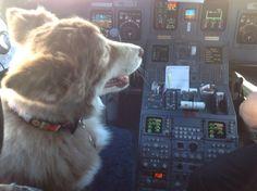 Alaska Airlines :)