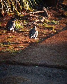 「今日どーするよ。行く?」 「イイ天気だしねぇ。でも寒いからなー。」  鳥もいろいろタイヘン。   #bird #鳥