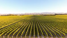 New Zealand – we don't need to tell you your wine is some of the best in the world. Why not combine your next holiday with a vineyard or two?