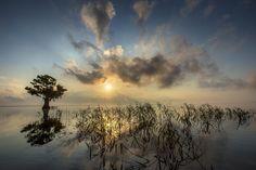 Unveiling in stillness - North Florida