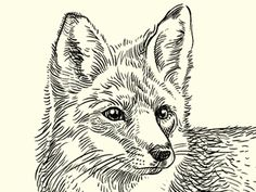 The Quick Brown Fox by MUTI
