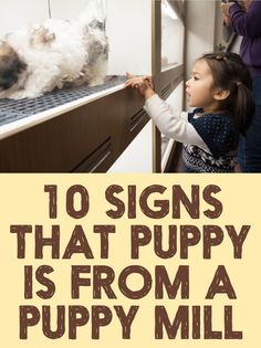 10 Signs that puppy is from a puppy mill
