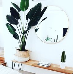 Indoor Plants, House Plants, Living Room Decor, Plant Leaves, Interior Design, Green, Home, Succulents, Inside Plants