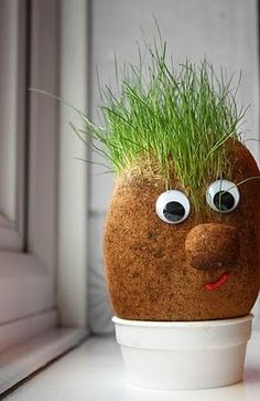 draft_lens11780971module108731781photo_1279406523mister-grass-head-needs-a1.jpg
