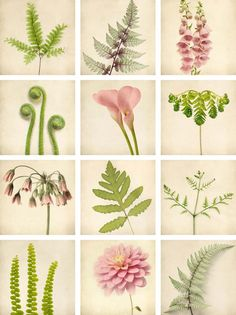 Botanicals, Affordable Art Prints by Allison Trentelman