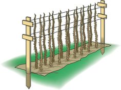 Raspberry Cane Support | Tip from the test garden