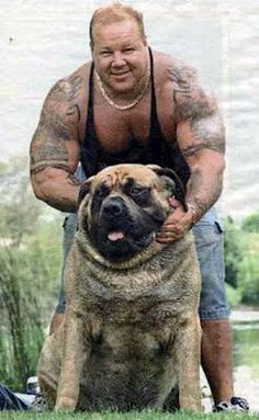 When People Resemble Their Pets: Say hello to this gargantuan specimen named Hercules, purportedly the Guinness Record holder for World's Biggest Dog. Hercules is an English Mastiff and has a 38 inch neck and weighs 282 pounds. Huge Dogs, Giant Dogs, I Love Dogs, Large Animals, Animals And Pets, Cute Animals, Worlds Biggest Dog, World's Biggest, Old English Mastiffs