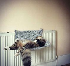 Katze müsste man sein   Webfail - Fail Bilder und Fail Videos