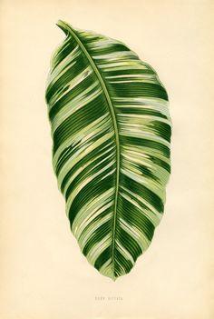 Free Vintage Leaves Image 11