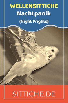 Panikflattern - Kennst du diese Situation? Du erwachst nachts und hörst ein schreckliches Geräusch aus dem Vogelzimmer, die Vögel flattern wie wild im Käfig umher und können sich scheinbar nicht beruhigen? Woran liegt das und was soll man dann am besten tun? Steht alles im Artikel. #wellensittiche #wellensittich #wellis Night, Movie Posters, Movies, Budgies, Parrots, Calm Down, Films, Film Poster, Film